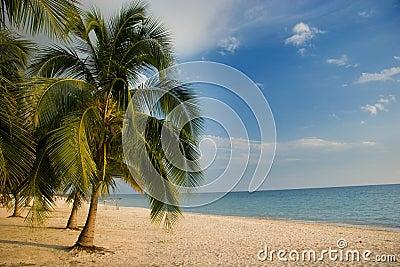 Palm tree lined beach, Playa Acone