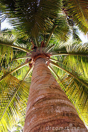Palm tree from low view