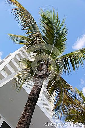 Palm tree in Miami city