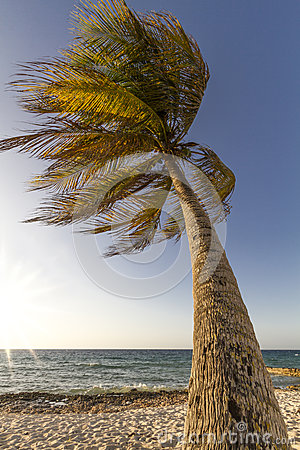 Palm tree moving in the wind