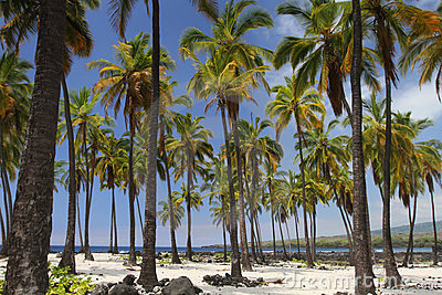 Palm Tree Oasis 3