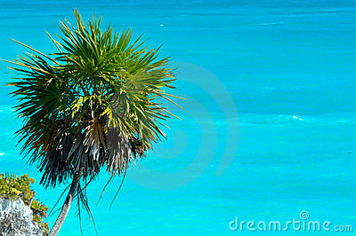 Palm Tree with Ocean