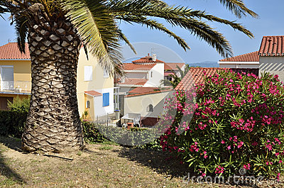 Palm tree and oleander at Saint Cyprien village in