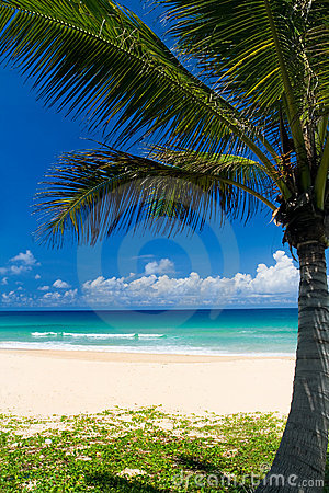 Free Palm Tree On A Tropical Beach Stock Image - 3211511