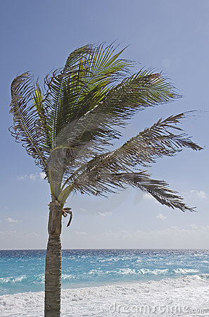 Free Palm Tree On Beach Stock Images - 3892864