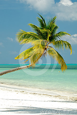 Free Palm Tree On Ocean Beach Royalty Free Stock Photography - 24609827