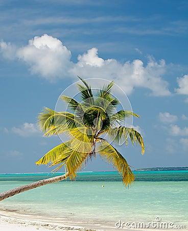 Free Palm Tree On Ocean Beach Royalty Free Stock Image - 28757896