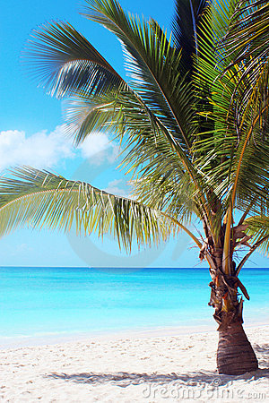 Free Palm Tree On Tropical Beach Royalty Free Stock Photo - 1517415