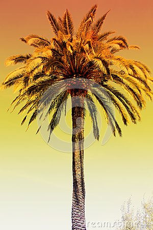 Free Palm Tree Orange Glow Sunset Royalty Free Stock Images - 103748159