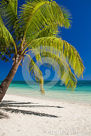 Palm tree over the beach overlooking tropical lagoon