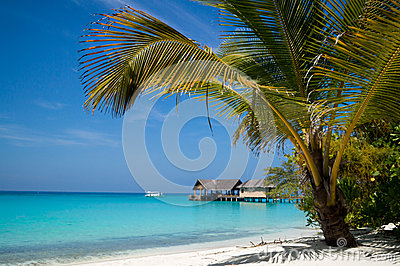 Palm tree over the beach overlooking tropical lago