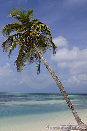 Palm Tree Over Blue Water