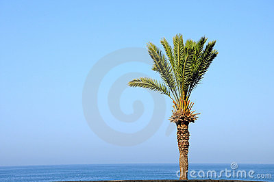 Palm tree over sea water 2
