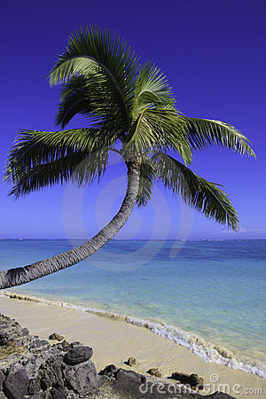 Palm tree over the water