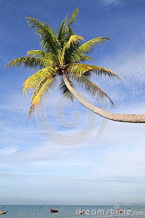 Palm tree over water