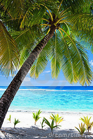 Palm tree overlooking blue lagoon