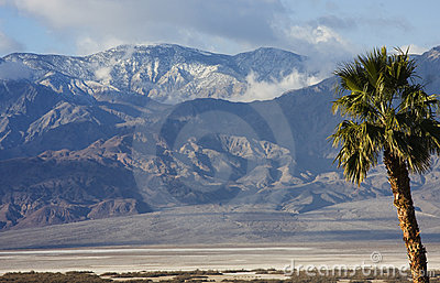 Palm Tree and Panamint Mountains