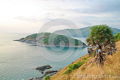Palm tree, Phromthep cape viewpoint , Phuket ,Thai