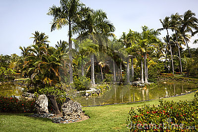 Palm Tree Pond