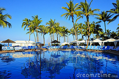 Palm Tree Pool