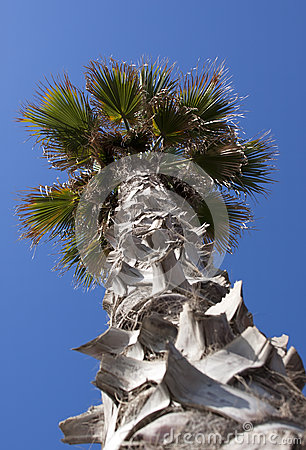Palm tree - RAW format