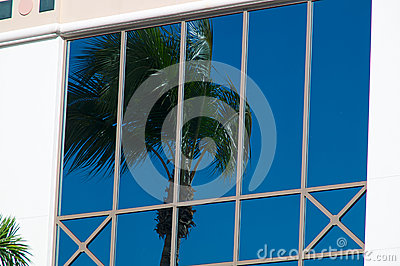Palm tree reflected in glass