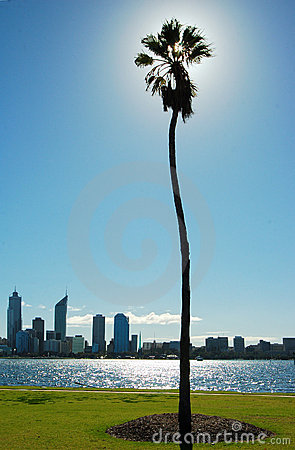 Palm tree and river cityline with skyscraper