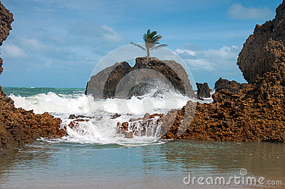 Palm Tree on Rock