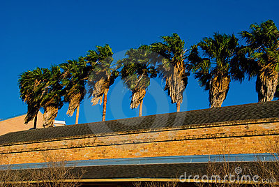 Palm tree and roof top