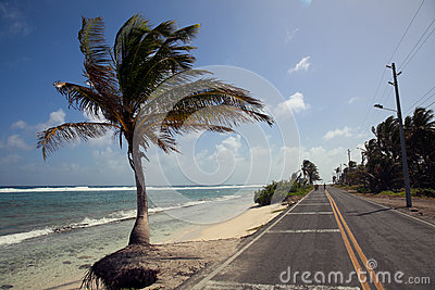 Palm Tree and the San Andres Island Beach