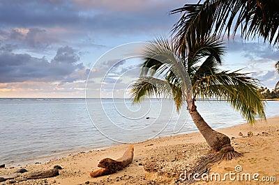 Palm Tree and Sand Beach in Hawaii