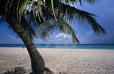 Palm tree Saona island beach Dominican republic