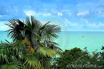 Palm tree at the sea with a yacht