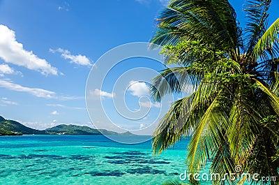 Palm Tree and Seascape