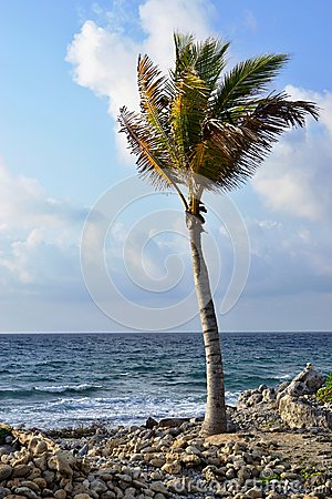 Palm tree on the seashore