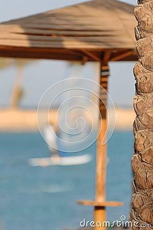 Palm tree at seaside resort