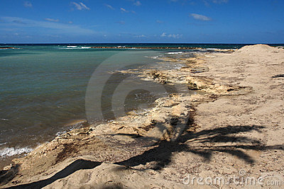 Palm tree shade on cyprus coast