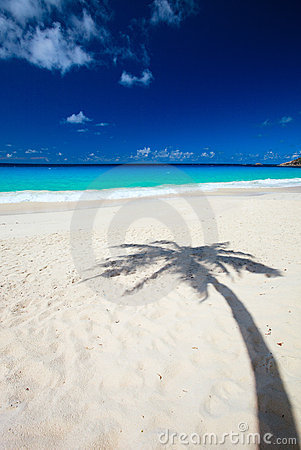 Palm tree shadow on beach