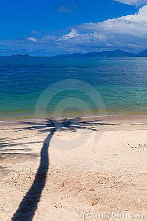 Palm tree shadow on the beach