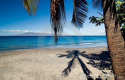 Palm Tree Shadow on Beach