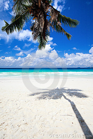 Free Palm Tree Shadow On Sand Royalty Free Stock Images - 17977589