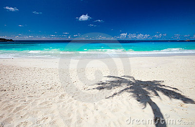 Palm tree shadow on sand