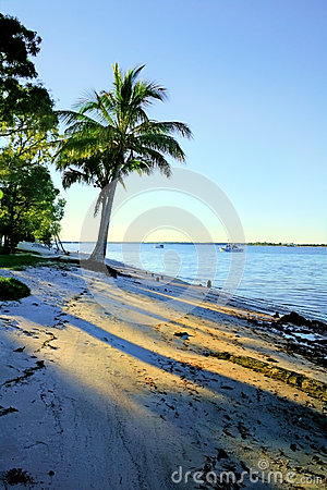 Palm Tree By The Shore