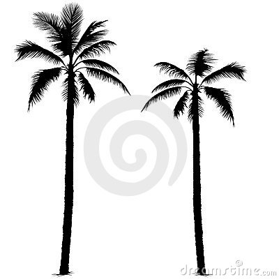 Free Palm Tree Silhouette 1 Stock Photo - 2522560