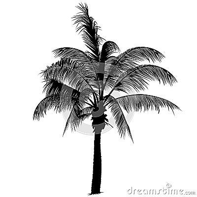 Free Palm Tree Silhouette 2 Royalty Free Stock Photos - 2522608