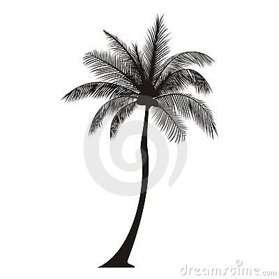 Free Palm Tree Silhouette Stock Image - 21387061