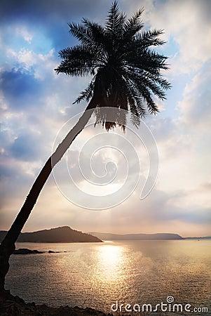Free Palm Tree Silhouette Stock Image - 31641241