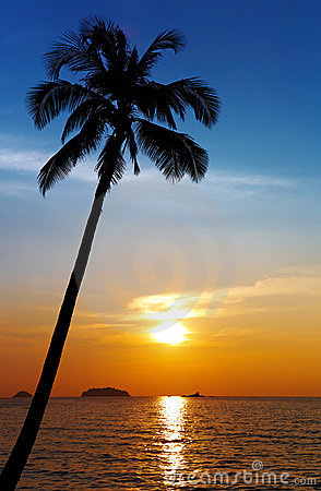 Free Palm Tree Silhouette At Sunset Stock Images - 12393164