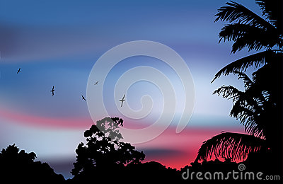 Palm tree silhouette on paradise sunset. Vector