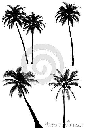 Free Palm Tree Silhouette Set On White Stock Photos - 18652833